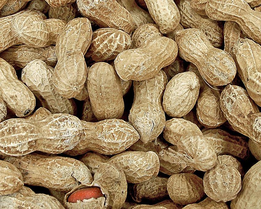 Come fare il burro di arachidi: il metodo per farlo in casa