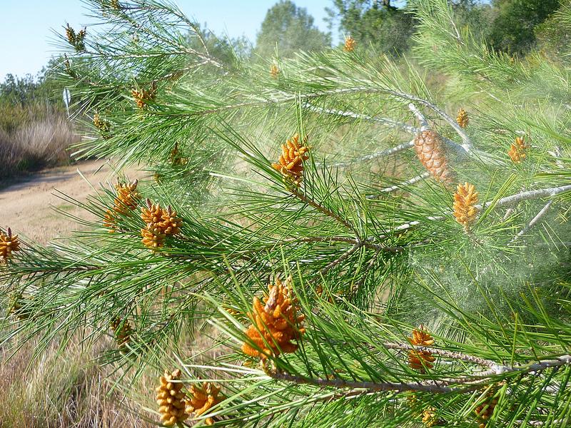 Come combattere le allergie di primavera con i rimedi naturali