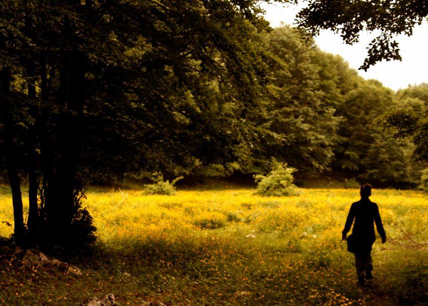 Zodiaco celtico arboreo, oroscopo e segreti degli alberi