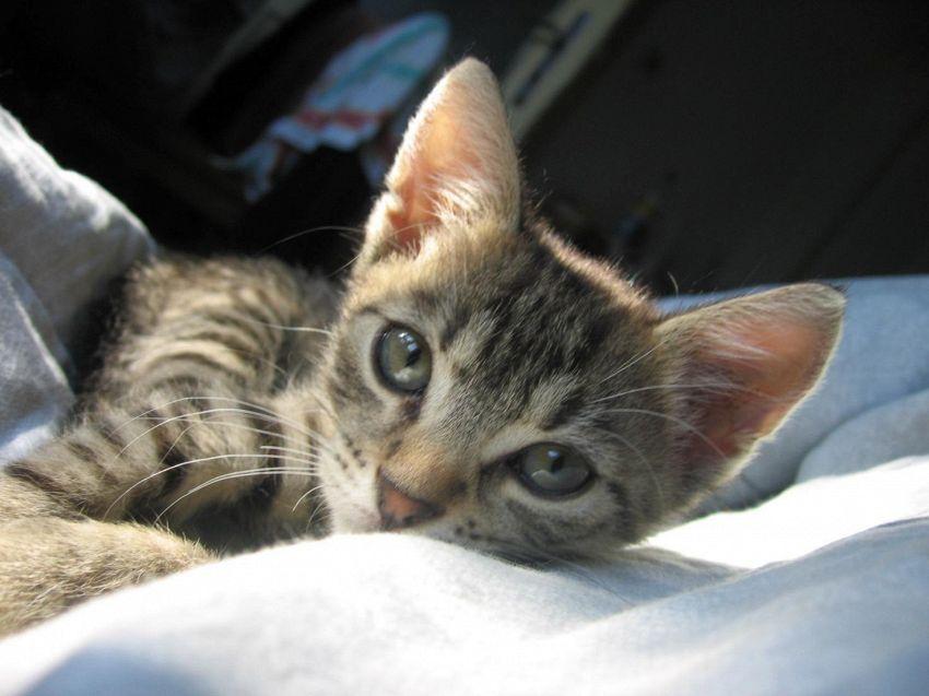5 comportamenti strani dei gatti