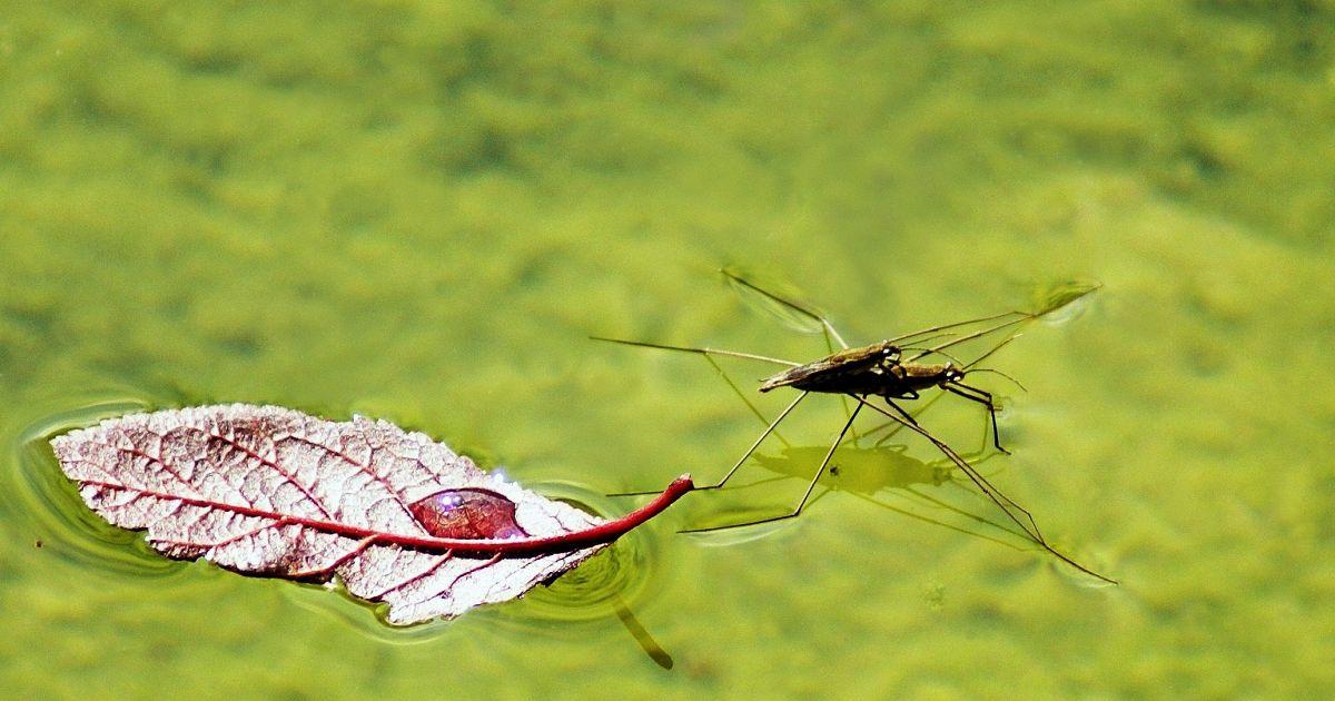 Rimedi contro zanzare e pappataci da quelli estremi ai naturali supereva - Rimedi contro le zanzare in giardino ...