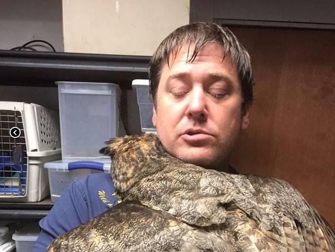 Il gufo abbraccia il suo salvatore, l'immagine fa il giro del web