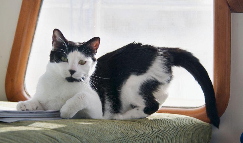 La coda animata, l'accessorio per entrare nel mondo dei gatti