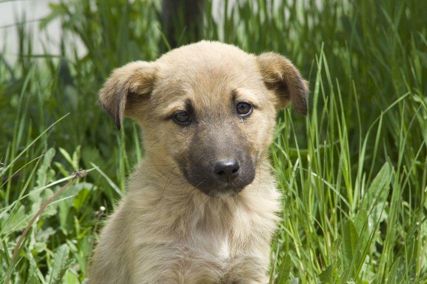 I 10 modi in cui il vostro cane vi dimostra il suo affetto