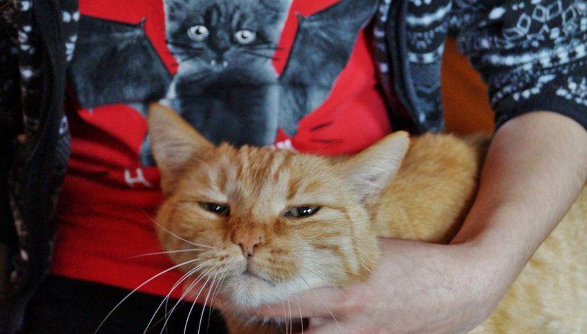 Il linguaggio dei gatti, non è poi così strano come sembra