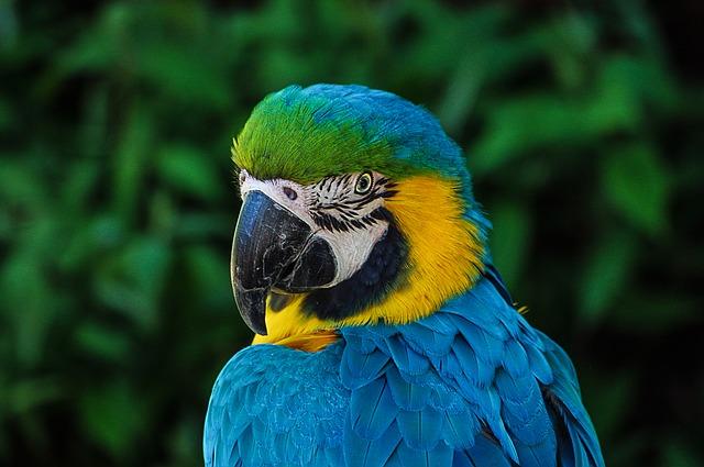Come si esprimono i pappagalli: voce e linguaggio del corpo