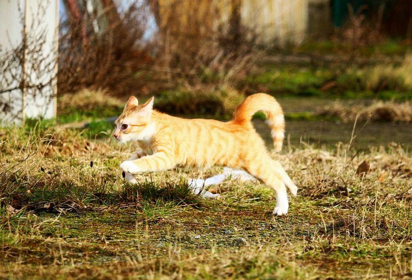 I gatti più agili del pianeta alla ricerca di nuove avventure