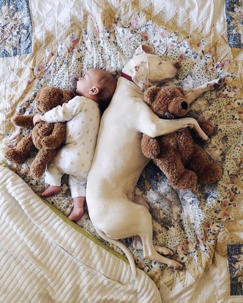 Nora: la cucciola abbandonata che ha adottato un bebè