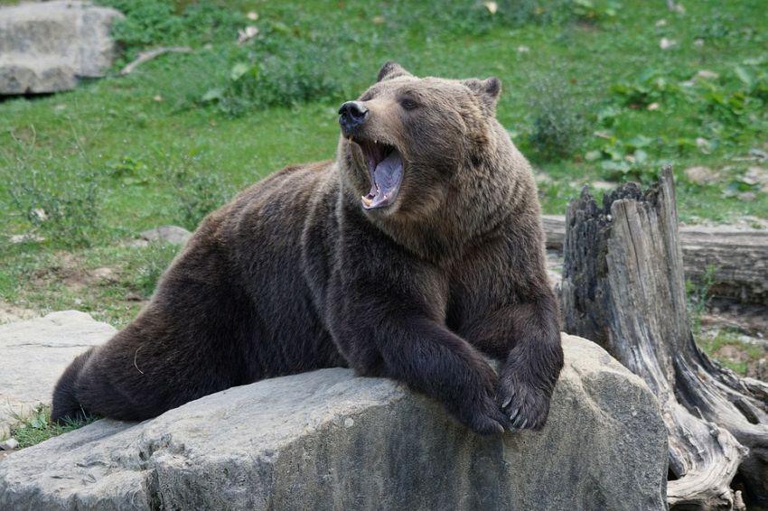 I mammiferi più pericolosi al mondo: sono veramente feroci?