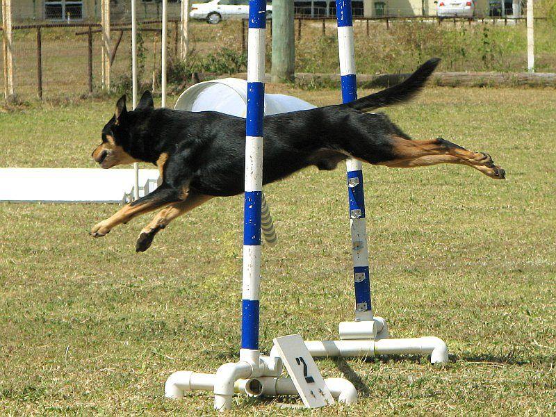 I cani più agili del pianeta: attivi in ogni situazione