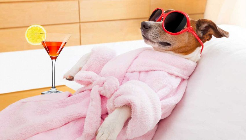 I cani dei ricchi, su Instagram è mania #richdogsofig