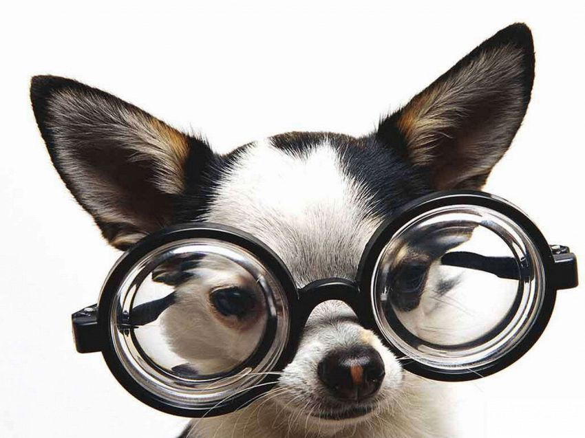 I costumi per cani ispirati ai film mai visti prima