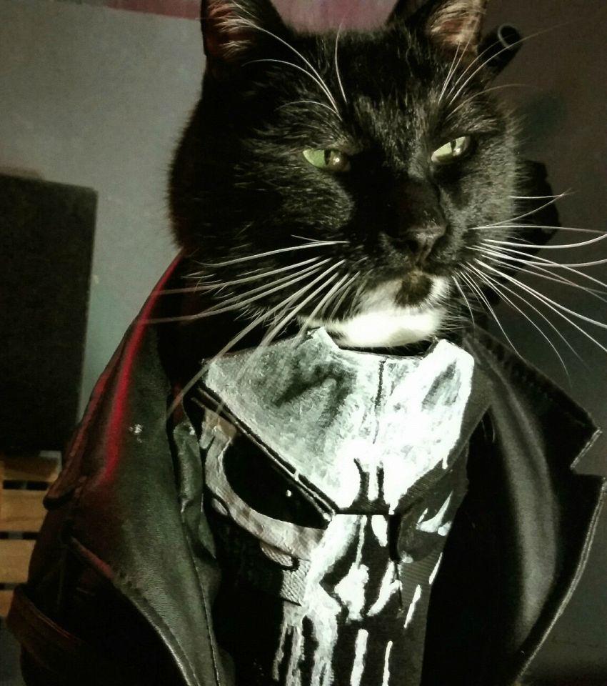 I costumi per gatti più paurosi: dal biker allo squalo