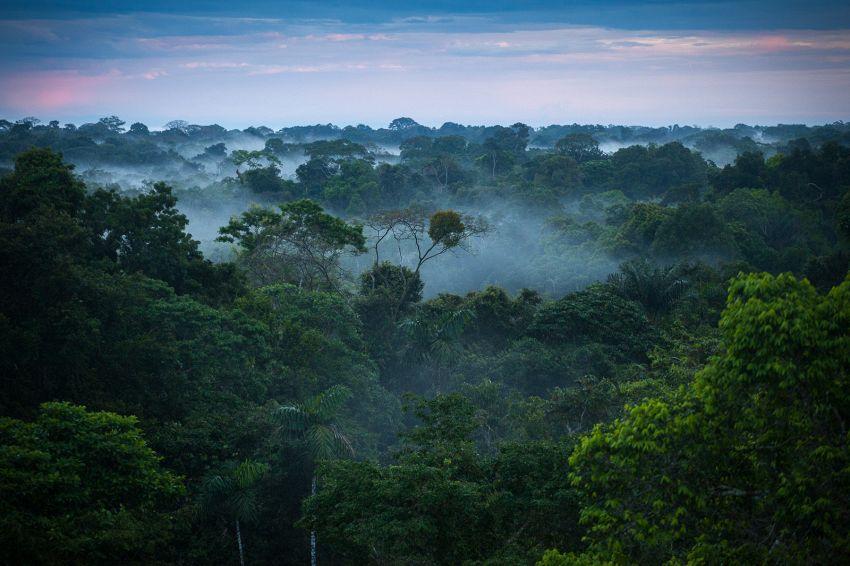 300 anni non bastano per contare gli alberi dell'Amazzonia