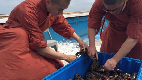 Monaci buddisti comprano 300 chili di aragoste e le liberano in acqua