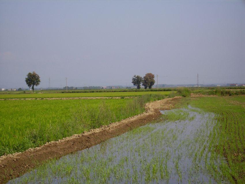 Geografia: che differenza c'è tra pianura e altopiano