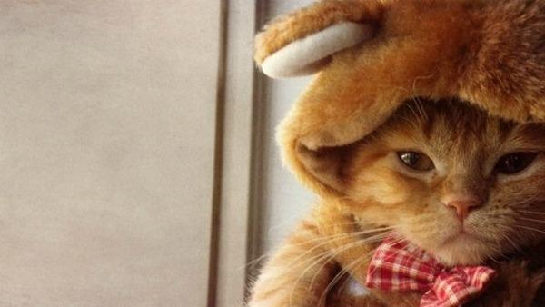 I costumi per gatti ispirati ai film