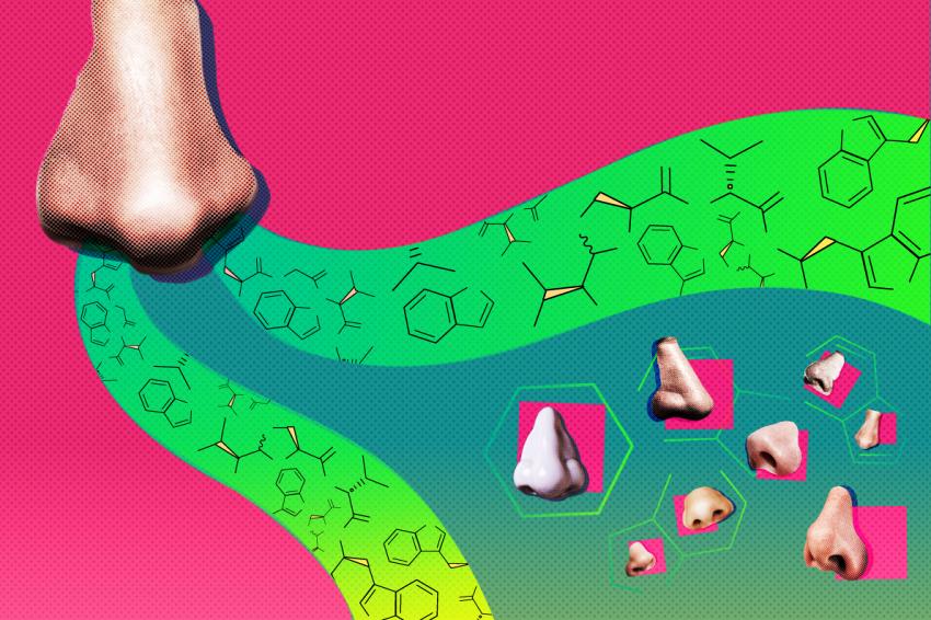 Scienziato fortunato scopre nuovo antibiotico nel suo naso