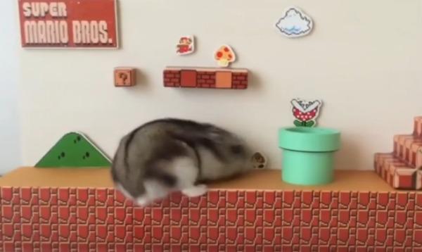 E se Super Mario fosse un criceto?