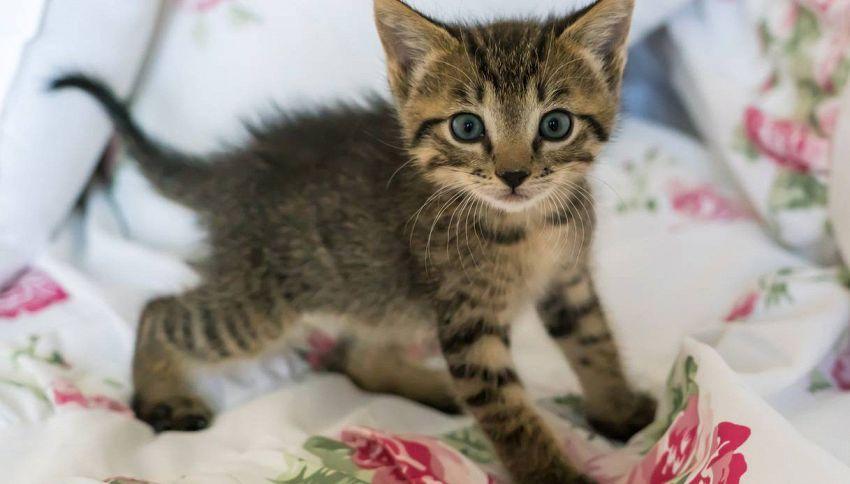 Perché e come avvisare il tuo gatto che sei incinta