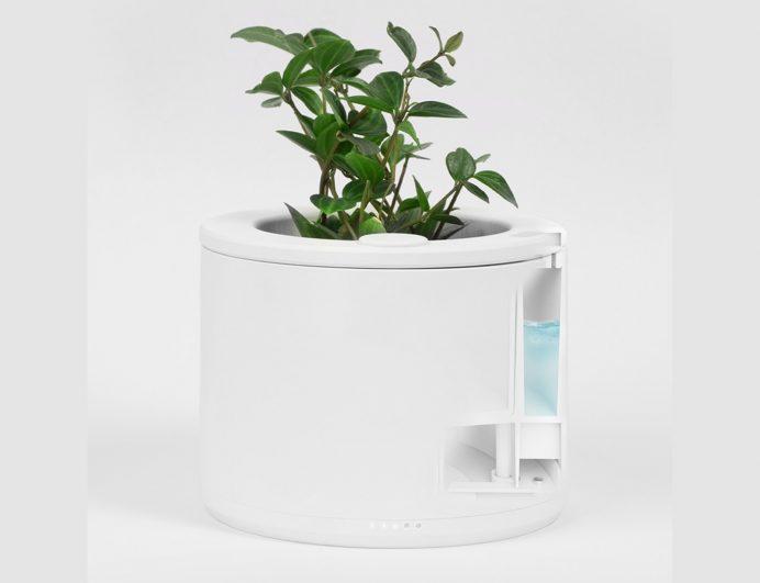 Come annaffiare le piante da qualsiasi parte del mondo