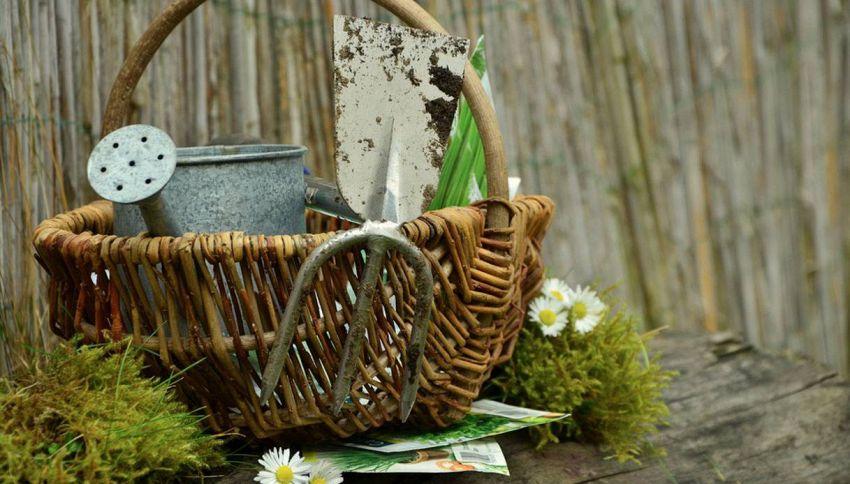Curare e mantenere al meglio il giardino di casa