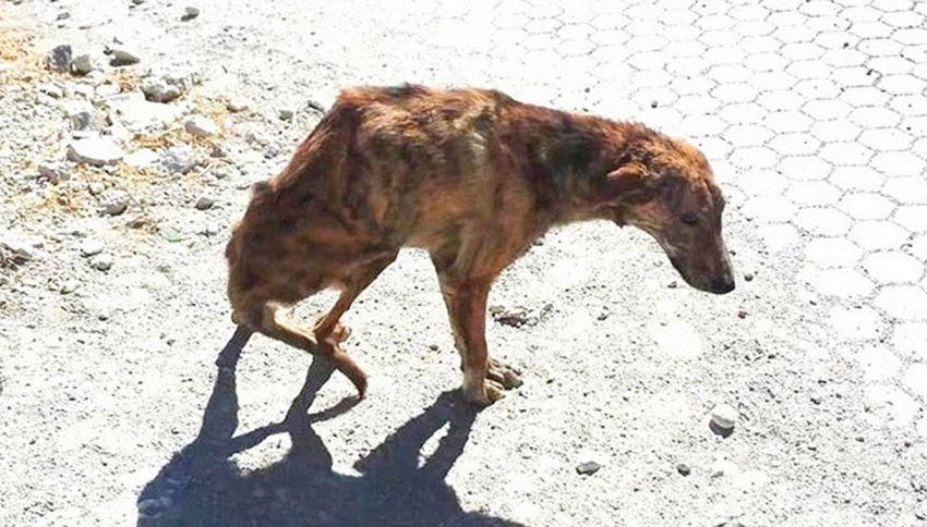Trova un cane ferito in vacanza e lo porta a casa in Olanda per guarirlo