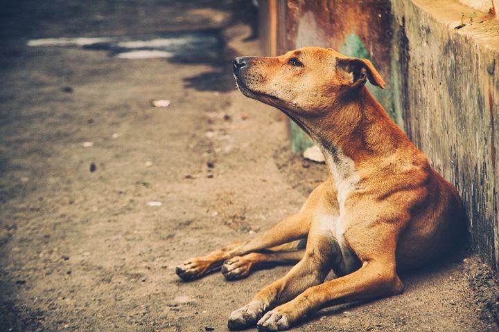Lasci il cane da solo in giardino? Si rischia il reato di abbandono