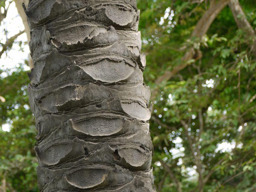 Olio di palma negli alimenti: nessuna ragione scientifica per demonizzarlo