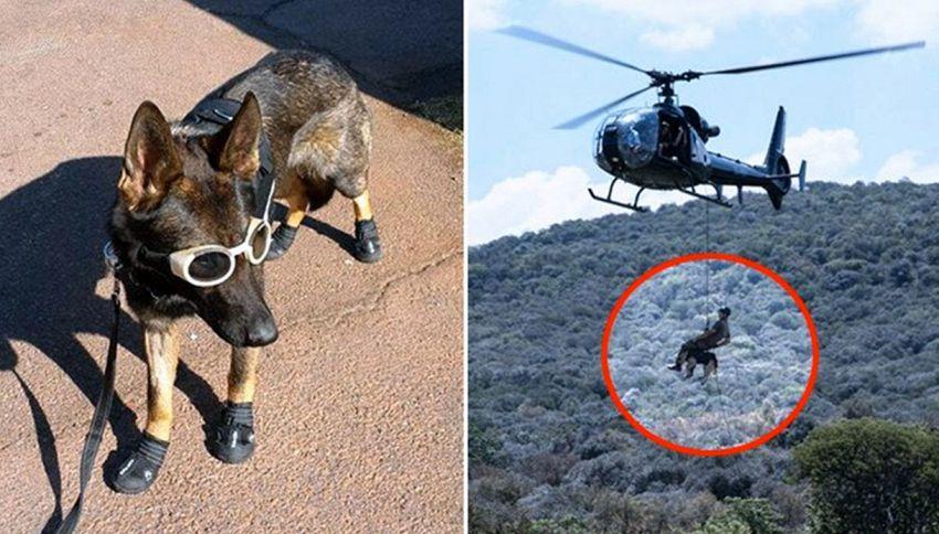 I cani diventano paracadutisti per salvare gli elefanti dal bracconaggio