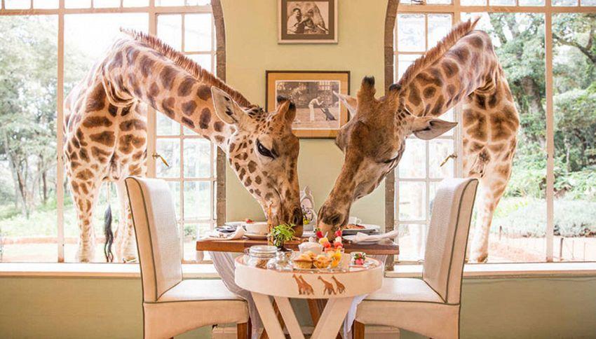 15 ristoranti spettacolari da provare almeno una volta nella vita