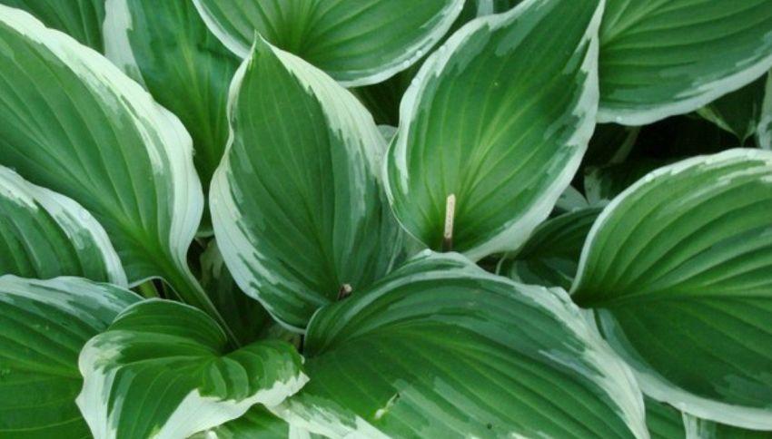 In futuro le piante saranno degli agenti segreti