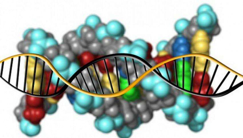 Il DNA sarebbe in grado di dirci quanti figli potremmo avere