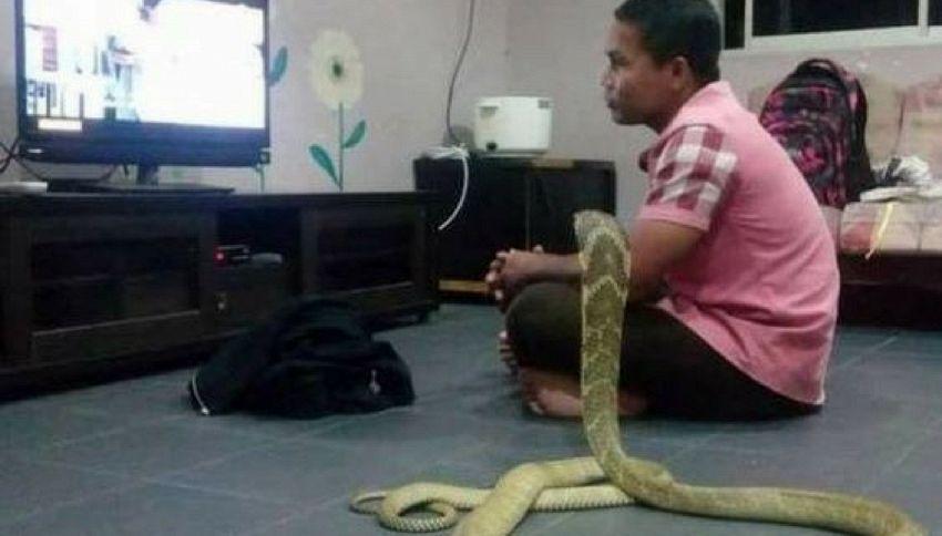 """Ecco l'uomo che ha sposato un cobra: """"È la mia fidanzata reincarnata"""""""