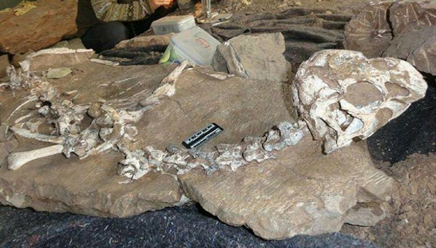 Cina, ritrovato un misterioso dinosauro di specie sconosciuta