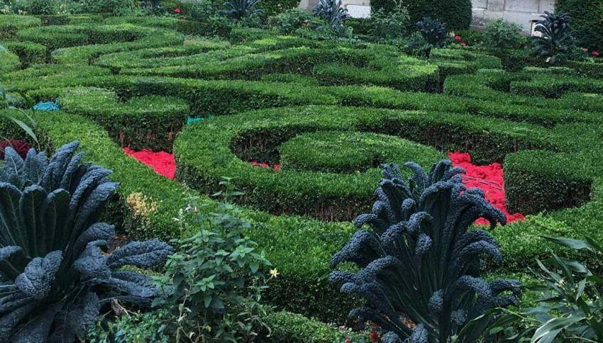 A Parigi si può piantare e coltivare ovunque in tutta la città