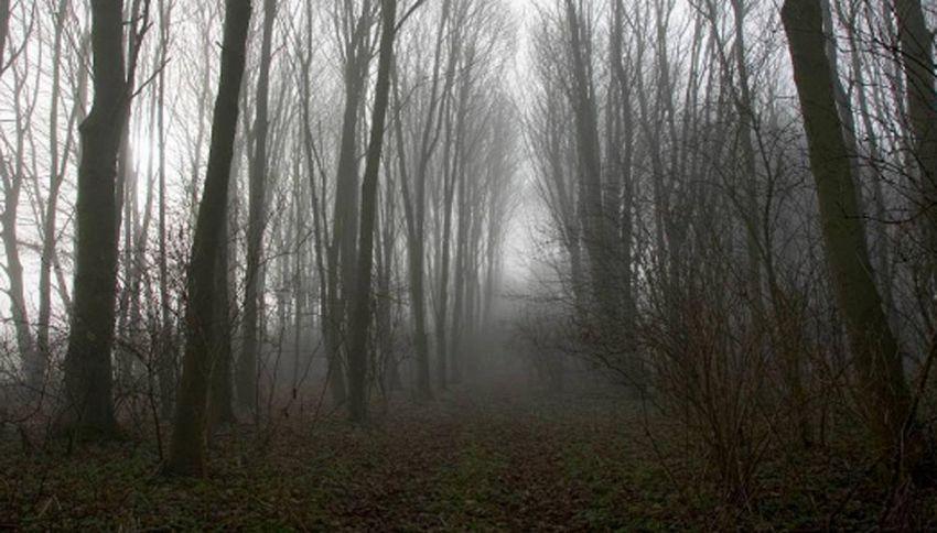 State alla larga dalla foresta di Hoia Baciu: è abitata dal maligno