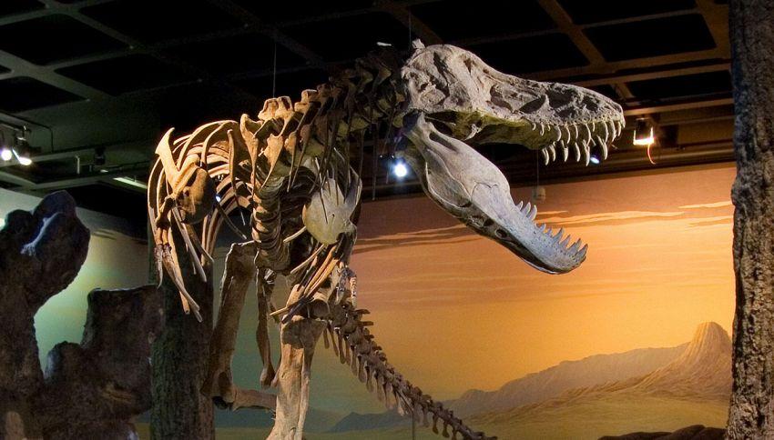 Una clamorosa scoperta riscrive la storia dei dinosauri