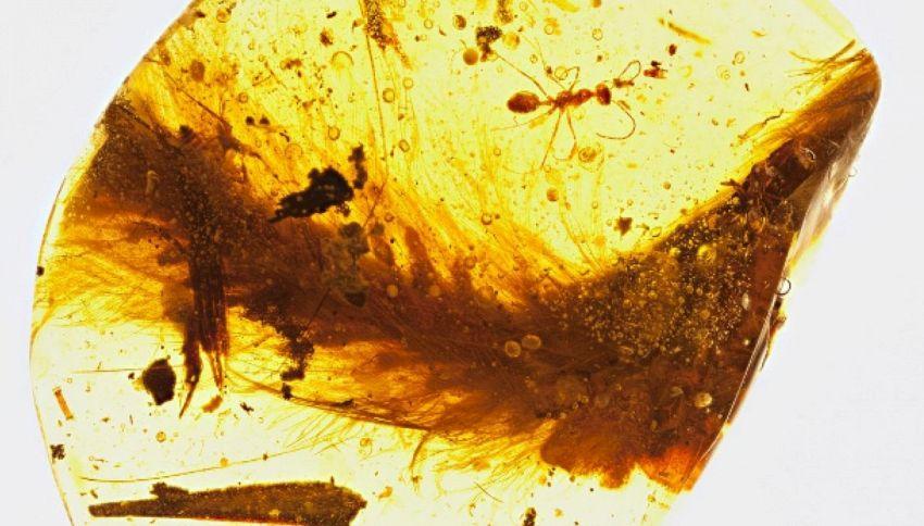 Compra un pezzo d'ambra al mercato, dentro c'è un dinosauro