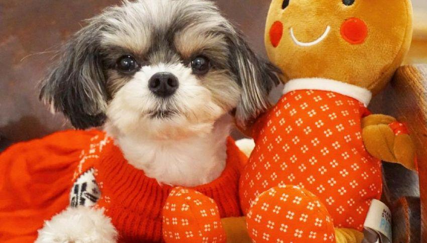 Tinkerbelle the dog, è un famoso modello e travel blogger