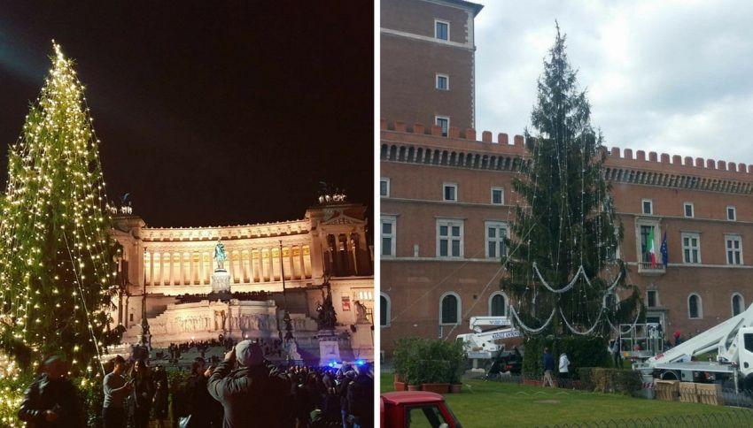 """L'albero di Roma sul Daily Mail: """"Il più brutto del mondo"""""""