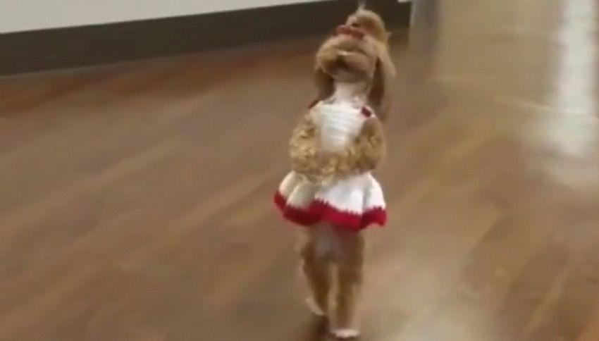 La tenera cagnolina accoglie i pazienti in ospedale