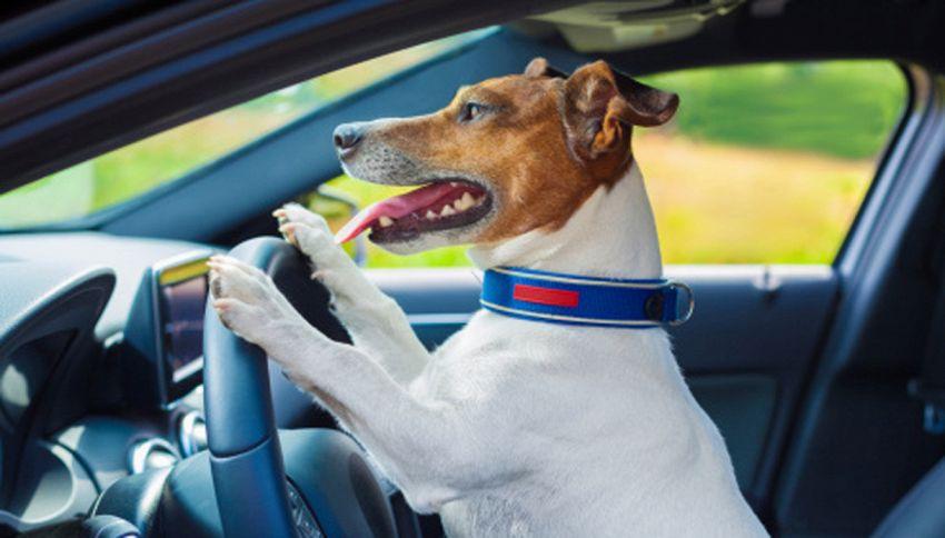 """Assurda chiamata ai pompieri: """"Il cane mi ha chiuso fuori dall'auto"""""""