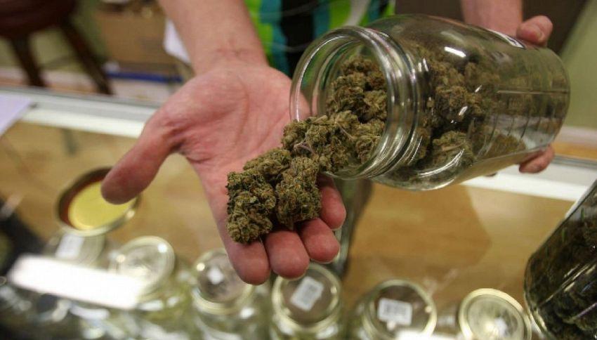 La cannabis di Stato da gennaio si potrà comprare in farmacia