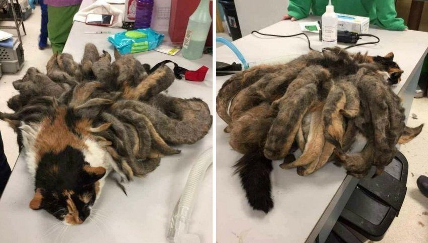 Gatto arriva in condizioni raccapriccianti dal veterinario. Adesso è così
