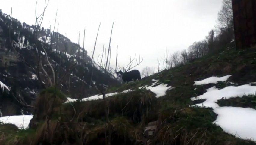 La gatta eroina: salva escursionista smarritosi sulle Alpi