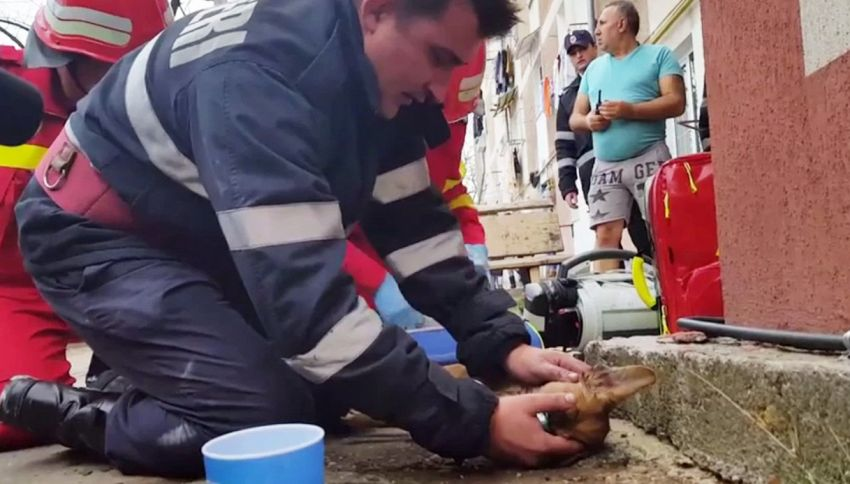 Pompiere salva il cane con la respirazione bocca a bocca