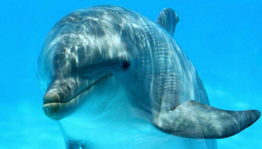 Scoperti i dialetti di balene e delfini