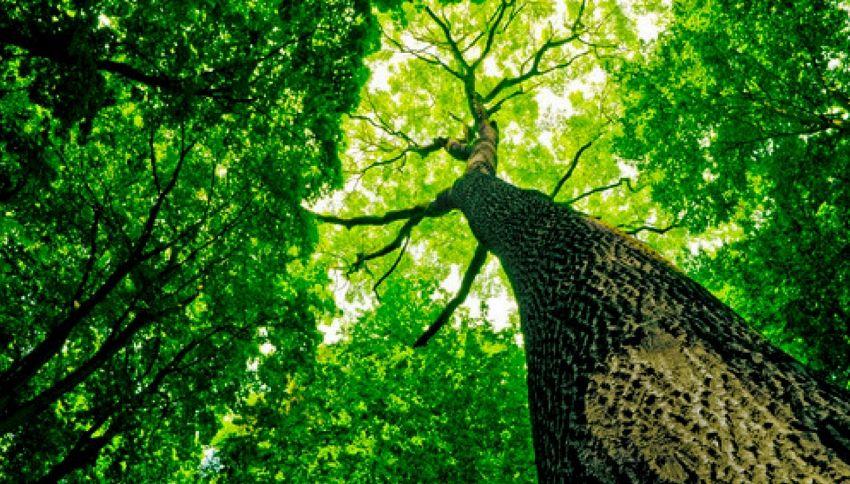 In Basilicata gli alberi 'si sposano'. Ecco perché