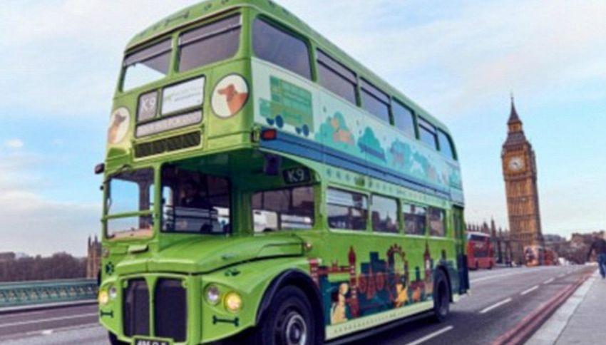 Il primo bus turistico per cani si trova a Londra